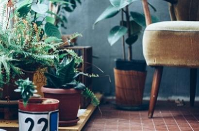 Peut-on dormir avec une plante dans sa chambre ?